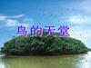 3 《鸟的天堂》PPT课件